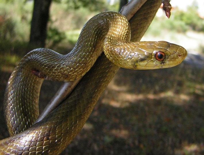 Serpenti in una scuola a Testaccio: degrado nella capitale