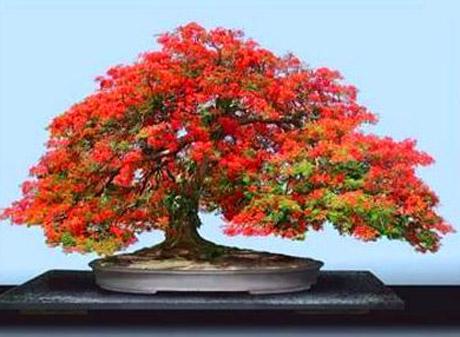 Come curare un bonsai