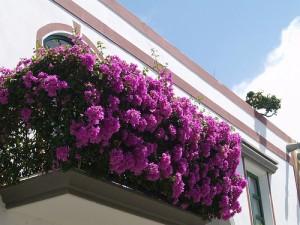 Come avere fiori in terrazzo in Inverno - La Macina Magazine