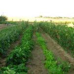 L'agricoltura e l'impresa innovativa